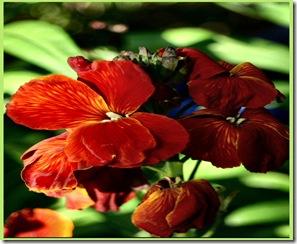 021 wallflower april adjust and frame